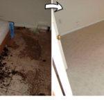 Basement-Cleanout-junkrat
