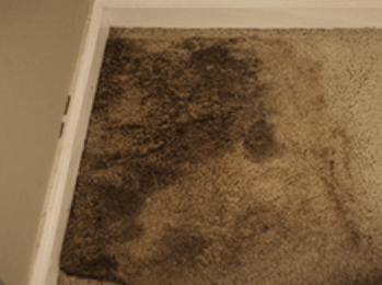 1844-junkrat-carpet-mold