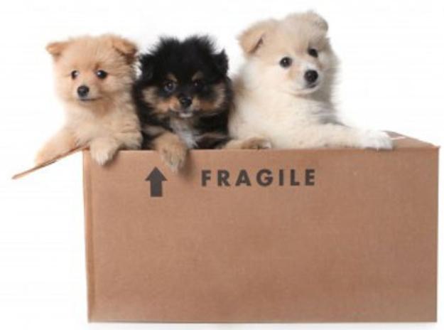 1-844-JUNK-RAT-Dog-Fragile